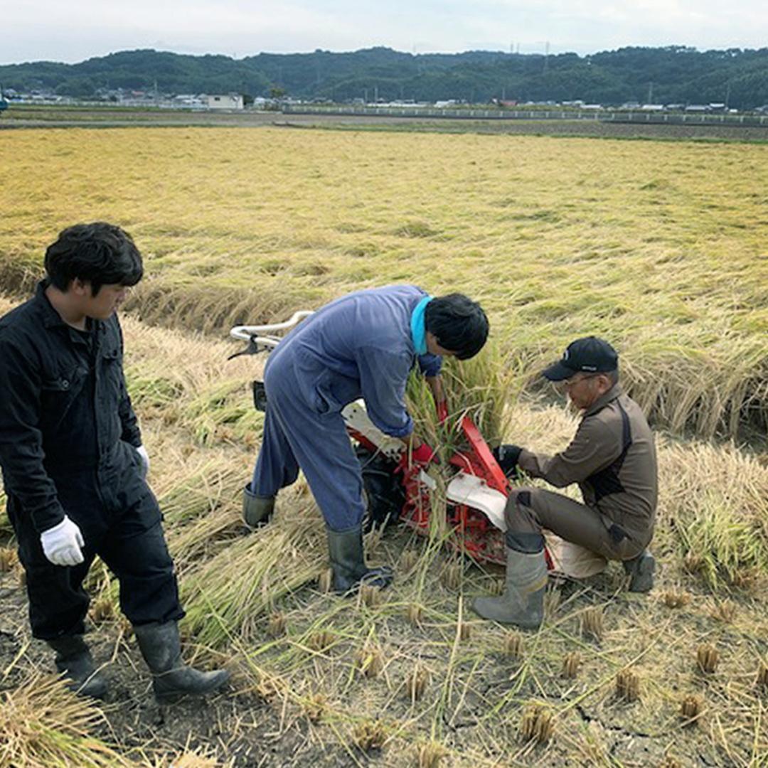 「スボワラ」と呼ばれる持ち手の藁は、最も適した希少な品種を自家栽培。他にも宮崎産の松煙や八女産の手漉き和紙など、近隣の天然素材を選び抜いて活用。