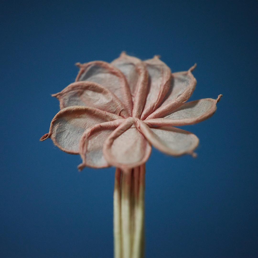 火を点けるのが惜しまれるほど。手練れの作る伝統花火は、まるで工芸品のような繊細な仕上がり。一本一本が、既に花として美しい。